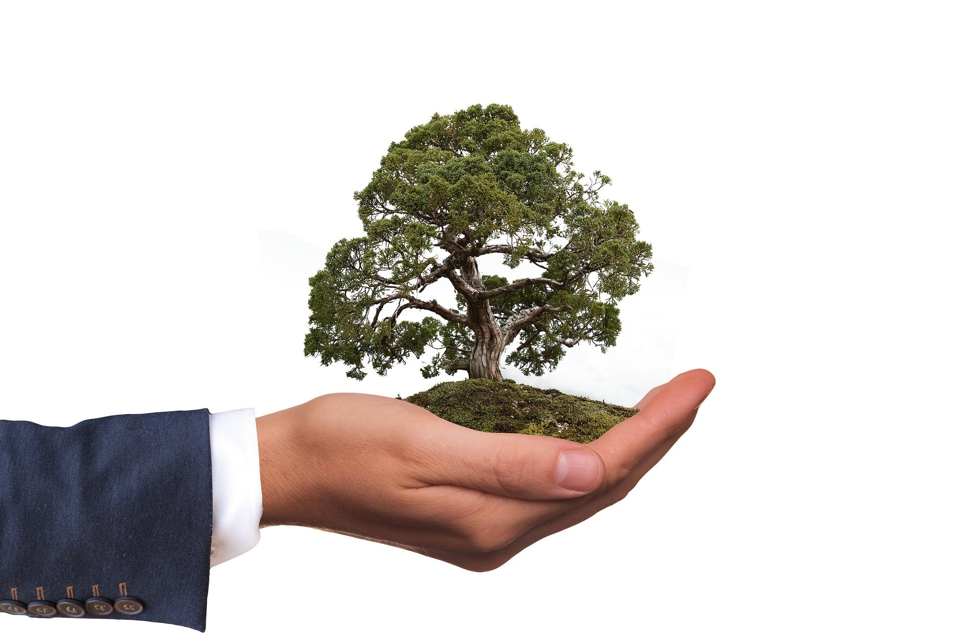 Semillero Derecho Ambiental